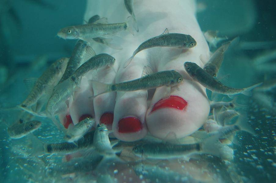Foot Massager--Doctor Fish Pedicure