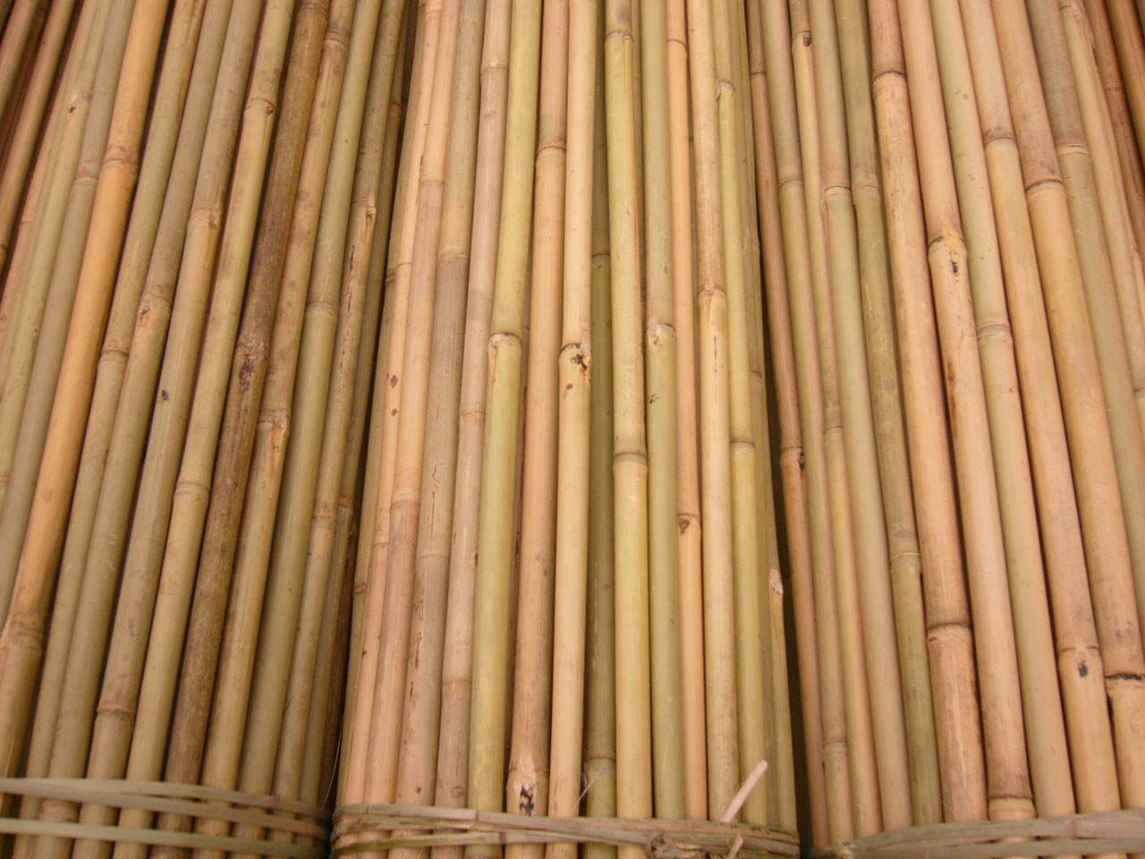 Bamboo poles canes stakes sticks tonkin manufacturer