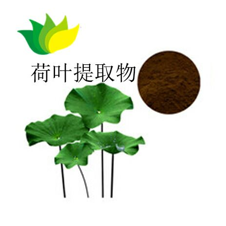 Name:lotus leaf extract