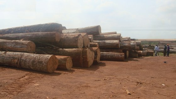 Sell African Hard Woods Logs Bubinga and Many Other