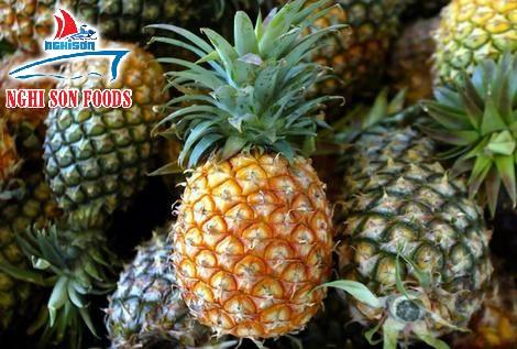 Vietnam Fresh Pineapple (+841214627828)