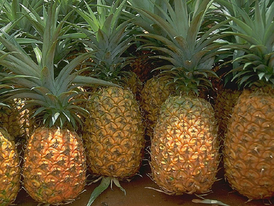Fresh Pineapple with Best Price
