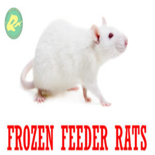 Frozen Feeder Rats for Reptiles, Amphibians, Birds of Prey, Carnivorous Animals Wholesale