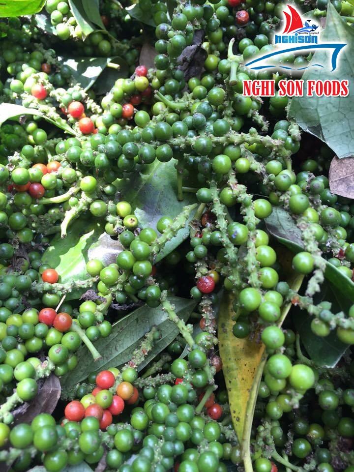 Vietnam Dried Pepper (+841214627828)