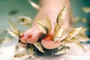 Pore Remover--Doctor Fish