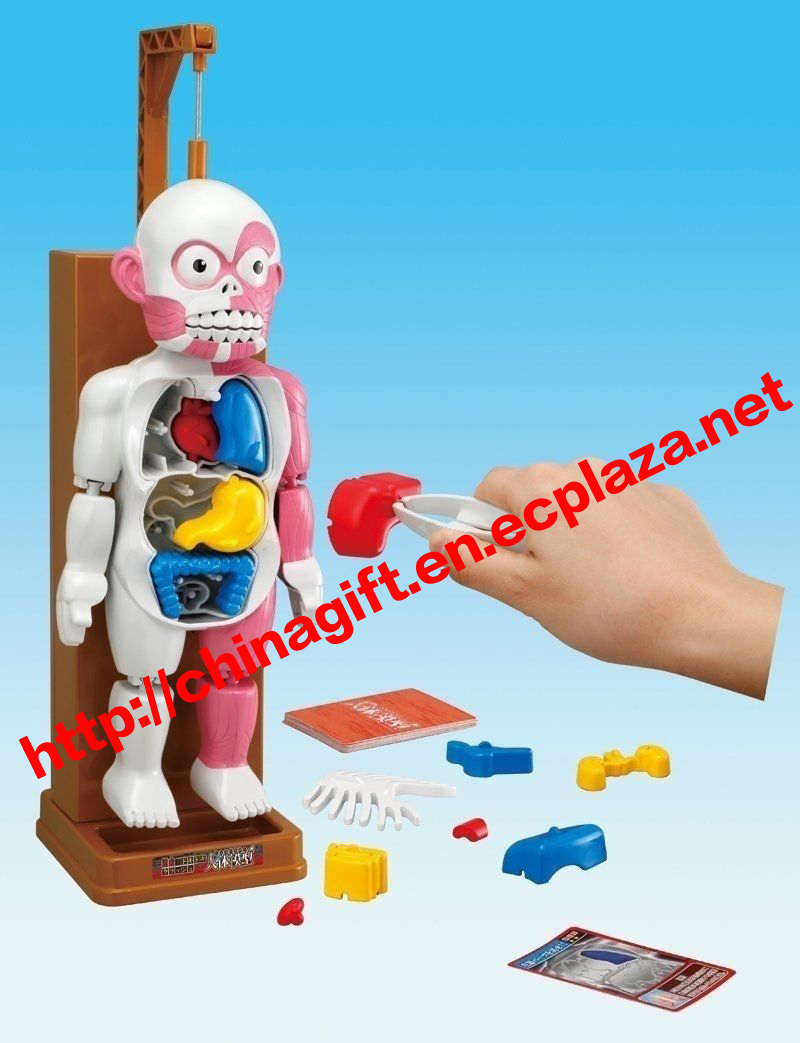 Human Body Model Toy