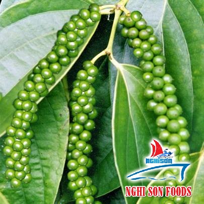 Vietnam pepper best quality (+841642828779)