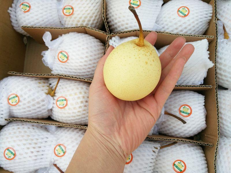 Ya Pears