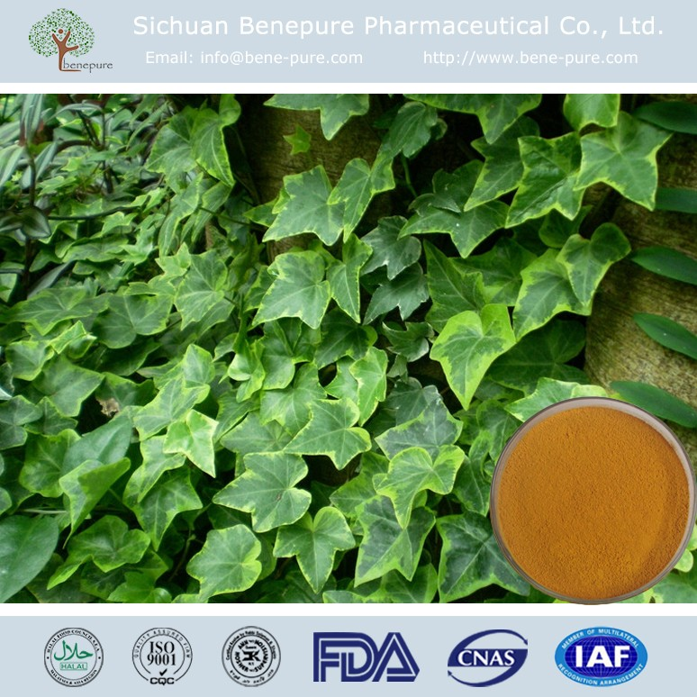 Organic Ivy Leaf Extract 1%~20% Hederacoside C BENEPURE