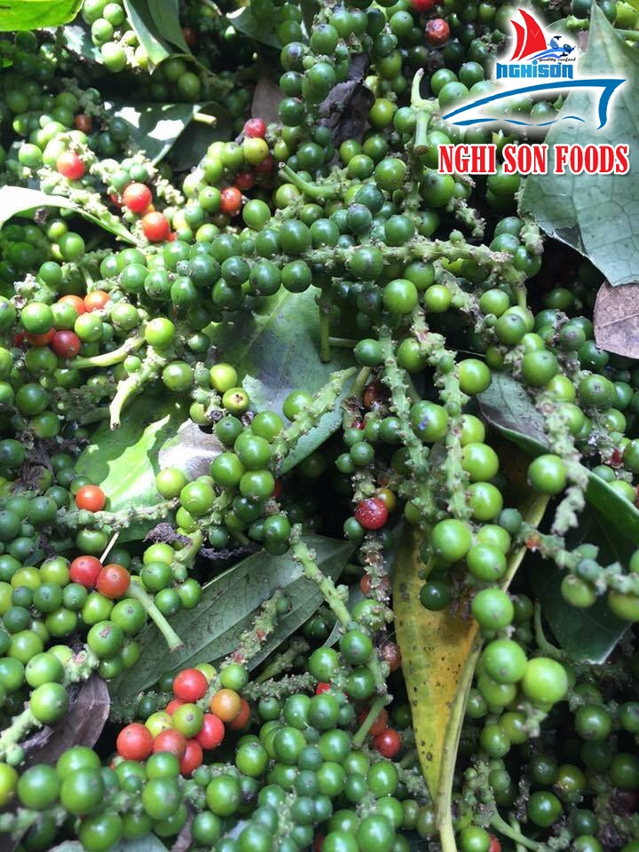 Grade A Vietnam black pepper (+841642828779)