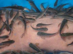 Doctor Fish Hands Spa--Dr Fish Manicure