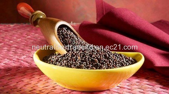 Mustard Seed (Premium Grade A) for Sale
