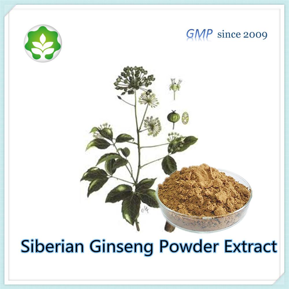 0.8 - 1.5% organic acanthopanax root powder extract p.e