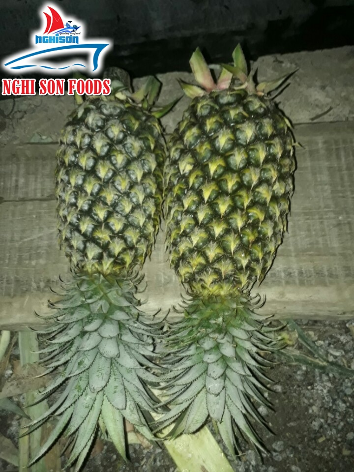 Fresh Pineapple (+841214627828)