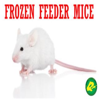 Frozen Feeder Mice for Reptiles, Amphibians, Birds of Prey, Carnivorous Animals Wholesale
