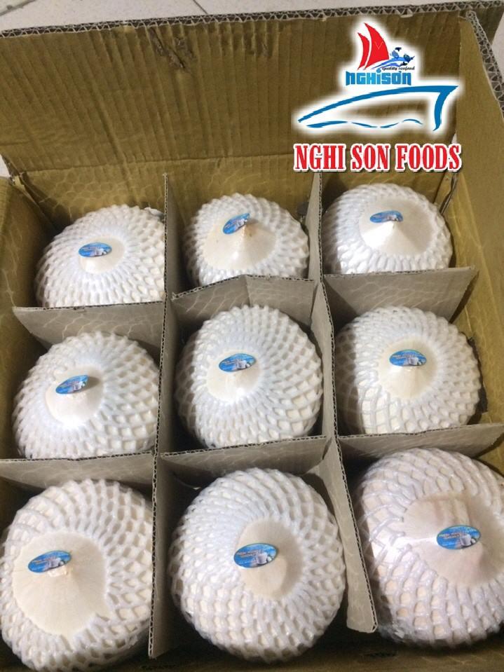 Vietnam Coconut (+841214627828)