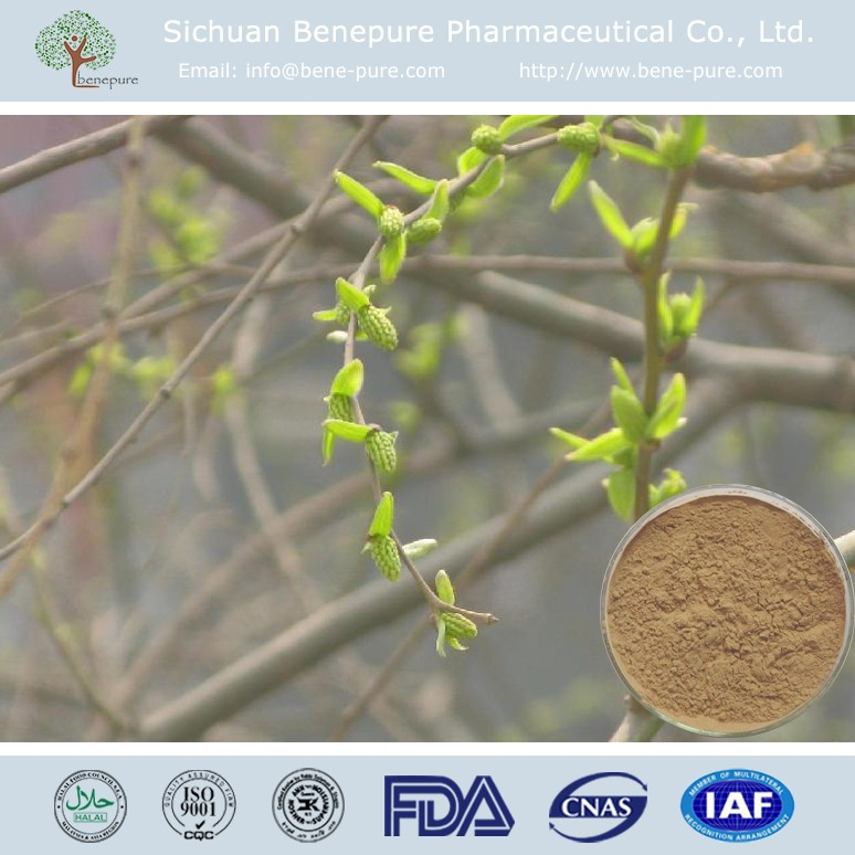 CAS 138-52-3 Natural aspirin salicoside salicin 15%-98% White Willow Bark Extract,BENEPURE
