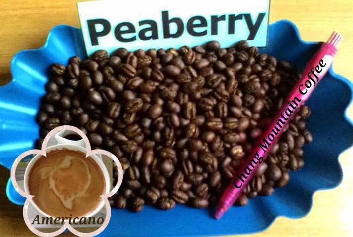 Premium Quality Roasted Arabica Coffee Beans
