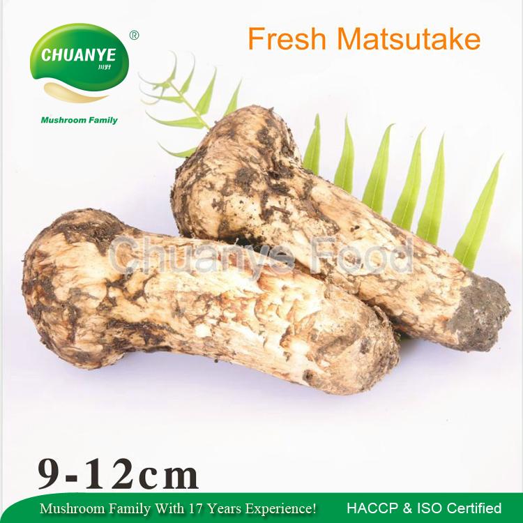 Presale 2017 High Grade 9-12cm Wild Fresh Japanese Matsutake Mushroom