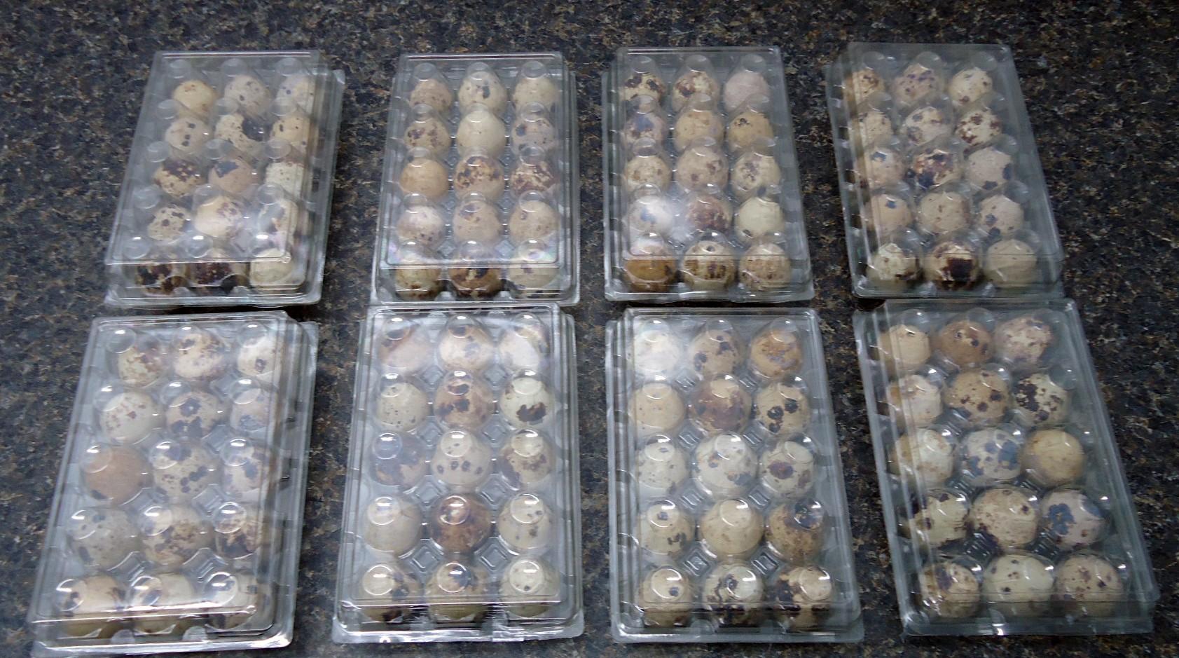 Fresh Quail Eggs,Parrot Eggs and Chicken Eggs