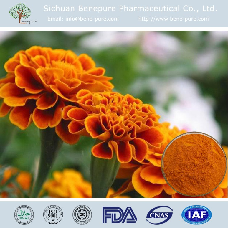 Eyes protection Marigold Extract zeaxanthin 5%-70% lutein powder 98%,BENEPURE