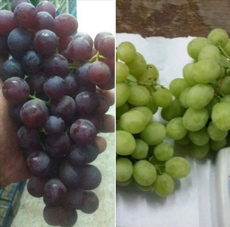 Egyptian fresh seedless grapes