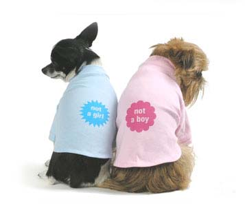 T-shirt for dog