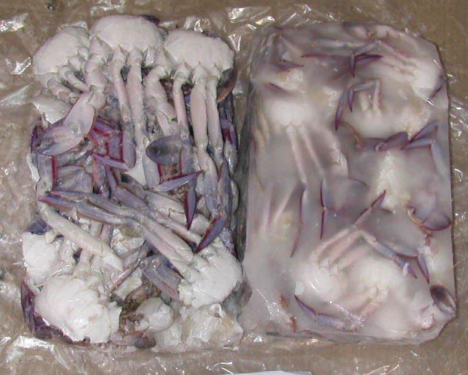 Crabs Mud Crabs King Crabs