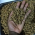 Tiger Nuts For Immediate Export