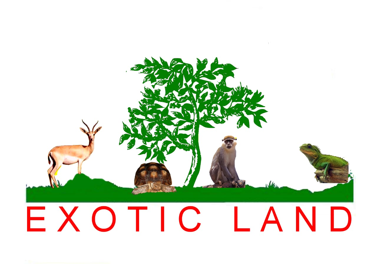 Exotic land logo