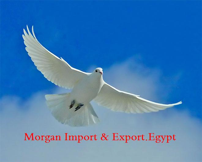 Morgan Import & Export.Egypt logo