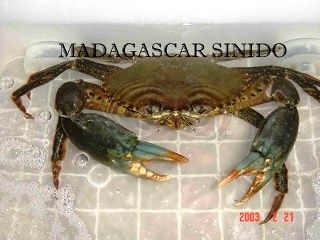 MADAGASCAR SININDO INVESTMENT LTD logo