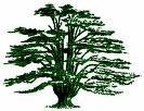 Cedar Biotea Sdn. Bhd. logo