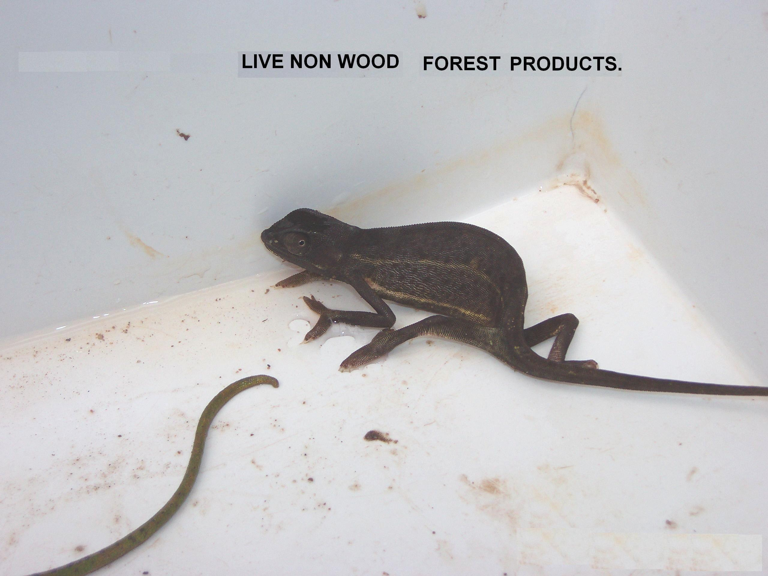Live Non Wood Forest Product logo
