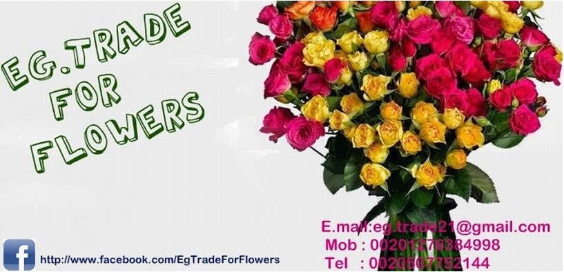 EG.trade Corporation  for import and export of flowers Main Image