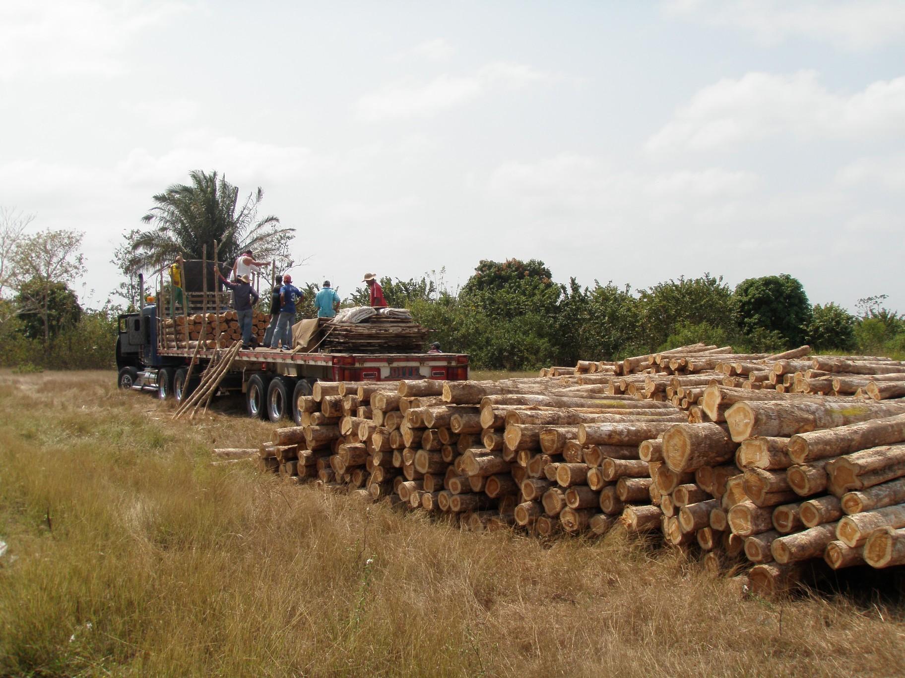 Caribbean Timber Company Main Image