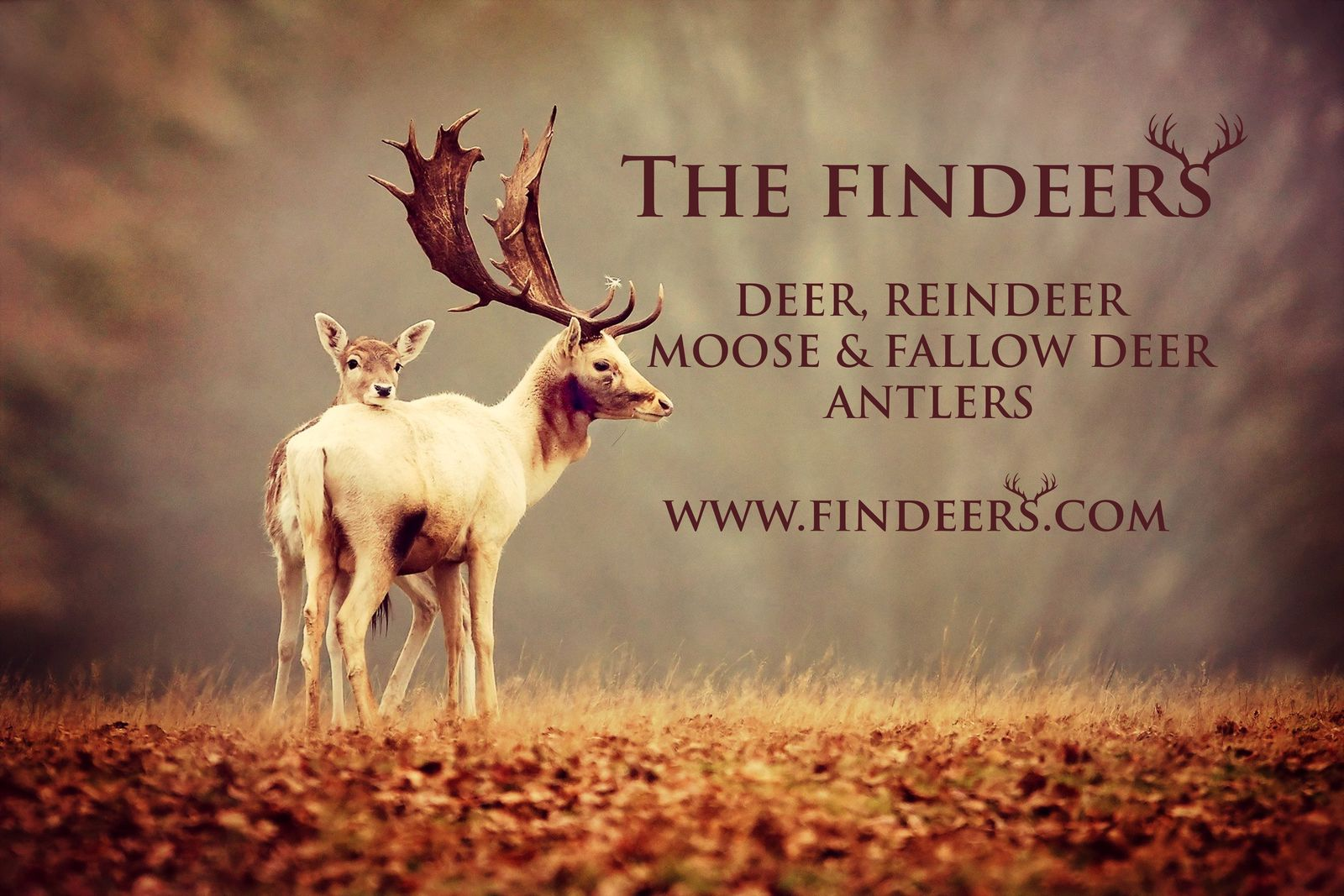 The Findeers Main Image