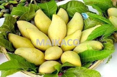 Vietnam Mango
