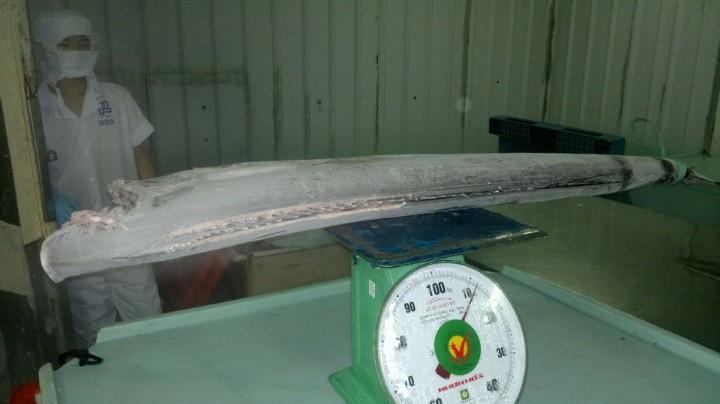 Frozen sailfish HGT good quality- good price