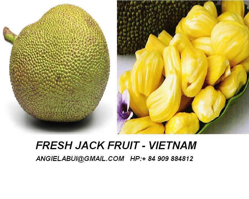 Fresh jack fruit, Frozen jack-fruit