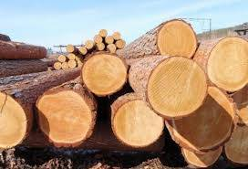 WE SUPPLY OF PINE TIMBER