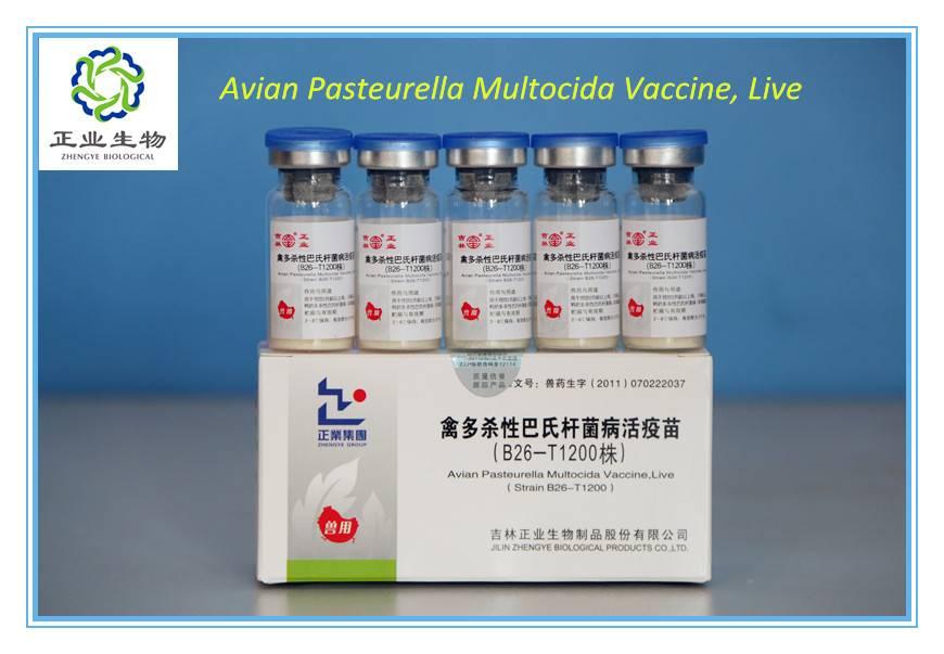 Avian Pasteurella Multocida Vaccine, Live