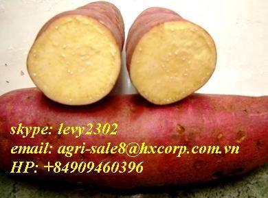 high quality vietnamese sweet potatoes