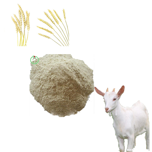 rice protein meal