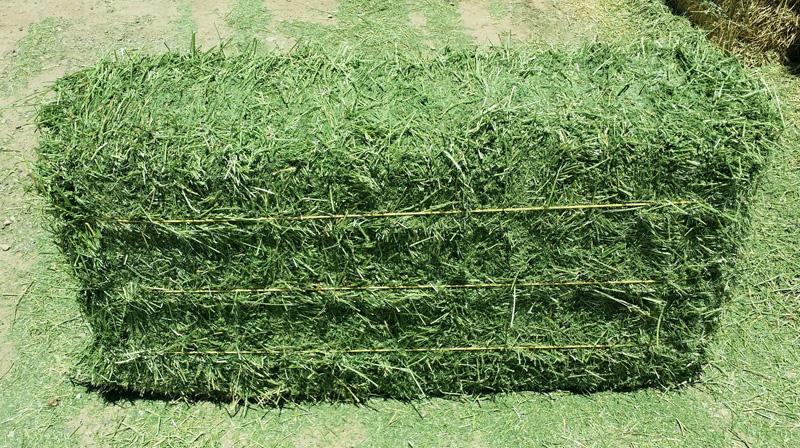 Alfalfa Hay,Timothy Hay