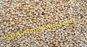 Raw Natural White Sesame Seed
