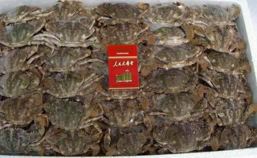 Charybdis Japonica Crab