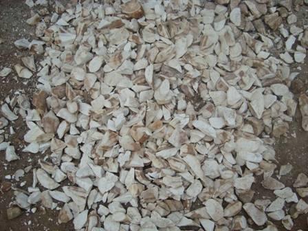 we supply Tapioca chips (Cassava chips)