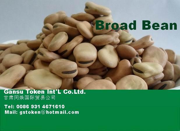Broad beans, big size, HPS quality.