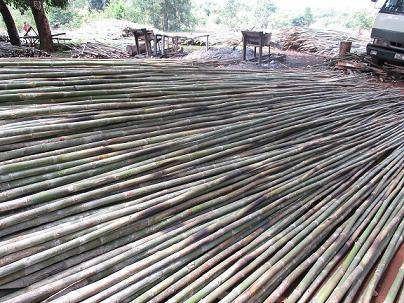 Hot sales 2015 for bamboo poles